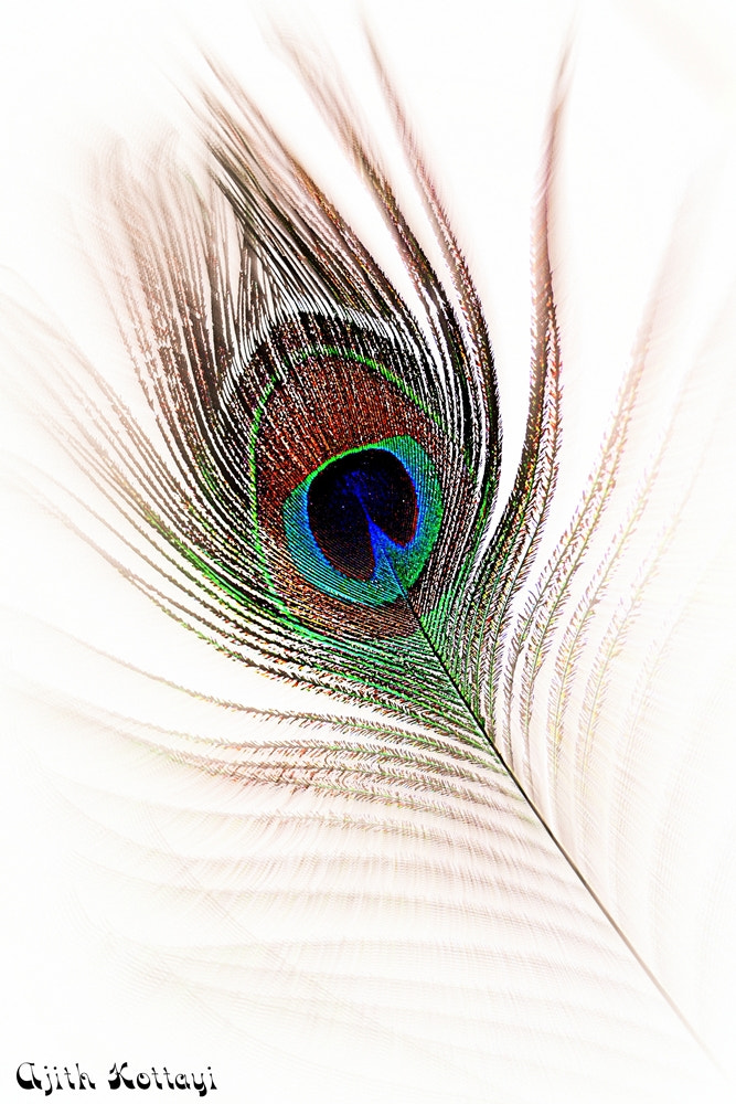 Photograph Feather Eye by Ajithkumar Veettikkad on 500px