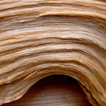 Gebogenes Holz, Canon DIGITAL IXUS 110 IS