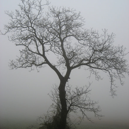 Kahler Baum im Nebel, Canon DIGITAL IXUS 60
