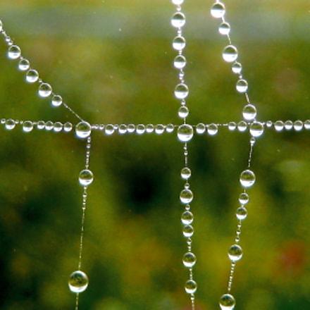 Spinnennetz mit Tautropfen, Canon DIGITAL IXUS 60