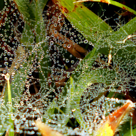 Cobwebs with dew drops, Nikon COOLPIX L28