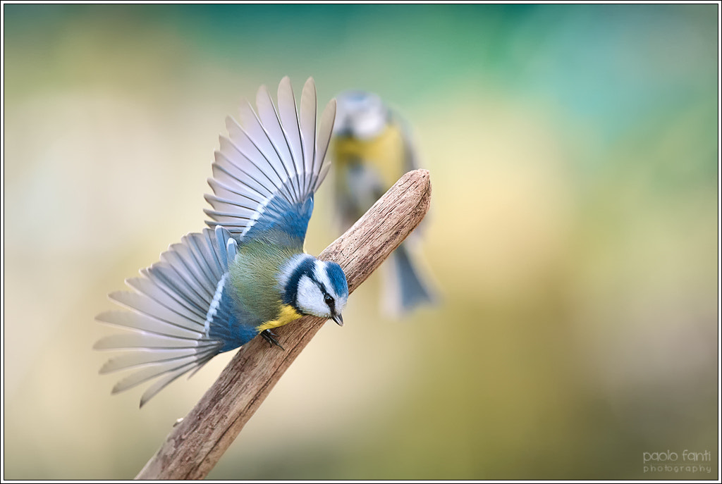 """Photograph """"ok, now I take off"""" by Paolo Fanti on 500px"""