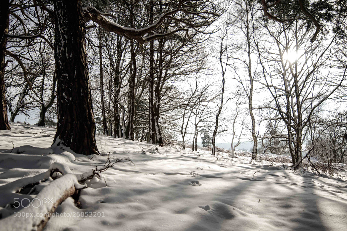 Photograph Snowy forest by Dan James on 500px