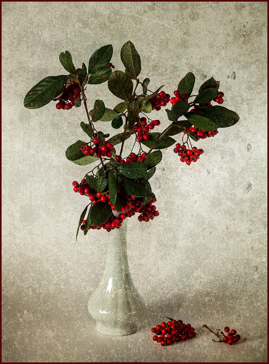 Photograph Still life in red by Sergio Codogno on 500px