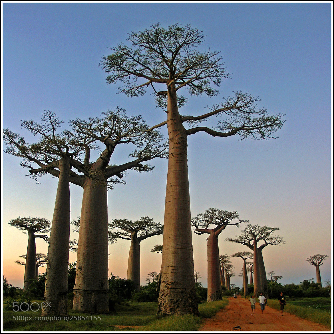 Photograph Sunset in the Baobab Avenue  by Zé Eduardo ... on 500px