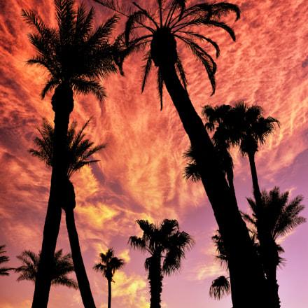 Palm Trees @ Sunset II, Nikon D810, AF-S Nikkor 35mm f/1.4G