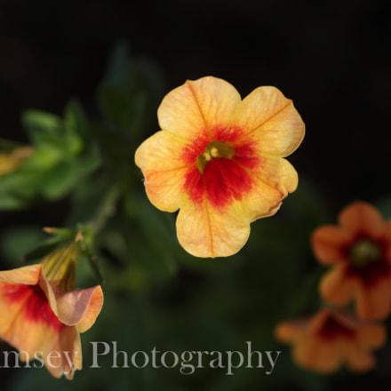 Standout Orange, Canon EOS 700D