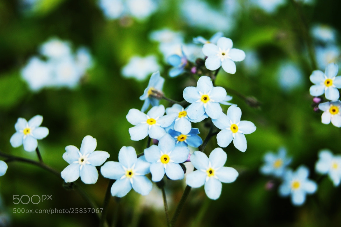 Photograph White flowers by Zaneta Warszewik on 500px