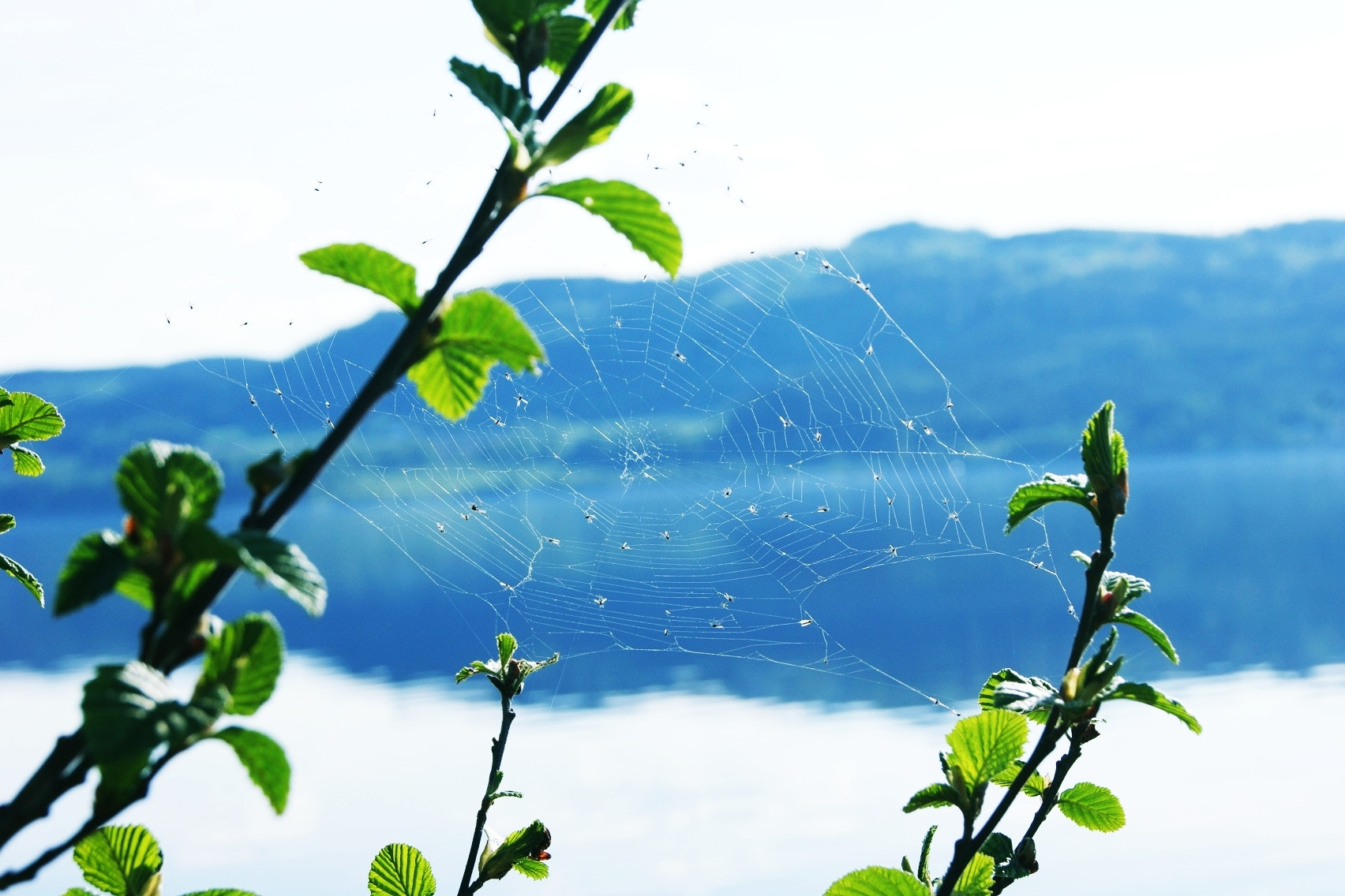 Photograph Spider's web by Zaneta Warszewik on 500px