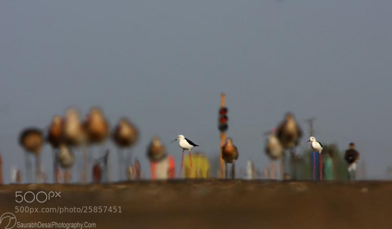 Photograph Traffic Jam by Saurabh Desai on 500px