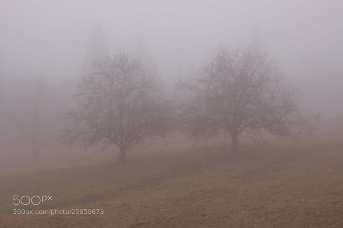 Photograph Foggy twins by Andrea Alessandro Benvenuti on 500px
