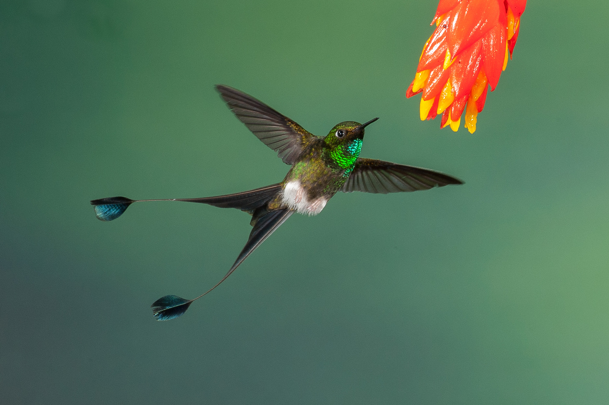 Photograph In flight by Gorazd Golob on 500px