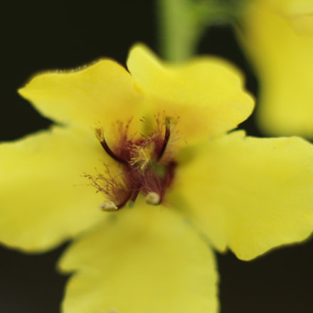 Yellow, Canon EOS REBEL T3I, Canon EF 35-80mm f/4-5.6