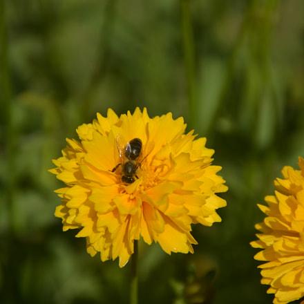 Yellow happy, Nikon D5200, Sigma 18-125mm F3.8-5.6 DC OS HSM