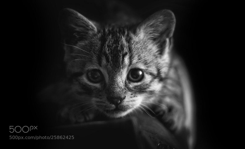 Photograph Mirada felina by Juan Boado on 500px