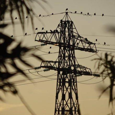 Transmission Tower and Birds, Sony DSC-WX300