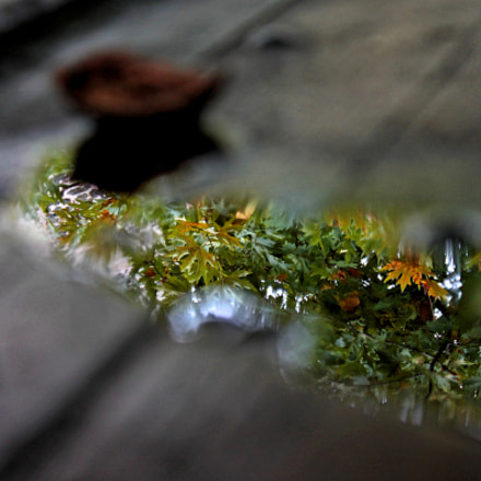 καθρεπτισμα...., Canon EOS 500D, Canon EF-S 18-55mm f/3.5-5.6 IS