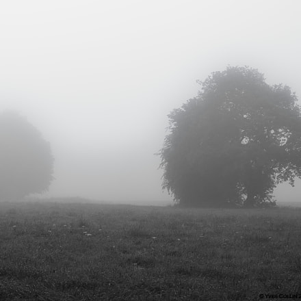 Tree in the mist, RICOH PENTAX K-3, smc PENTAX-DA* 50-135mm F2.8 ED [IF] SDM
