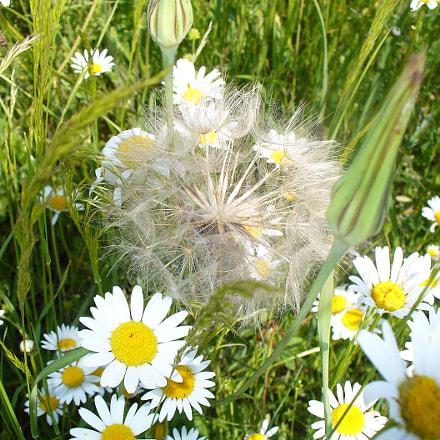 Fleurs des champs 1, Panasonic DMC-LZ5