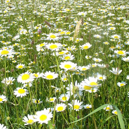 Fleurs des champs 2, Panasonic DMC-LZ5