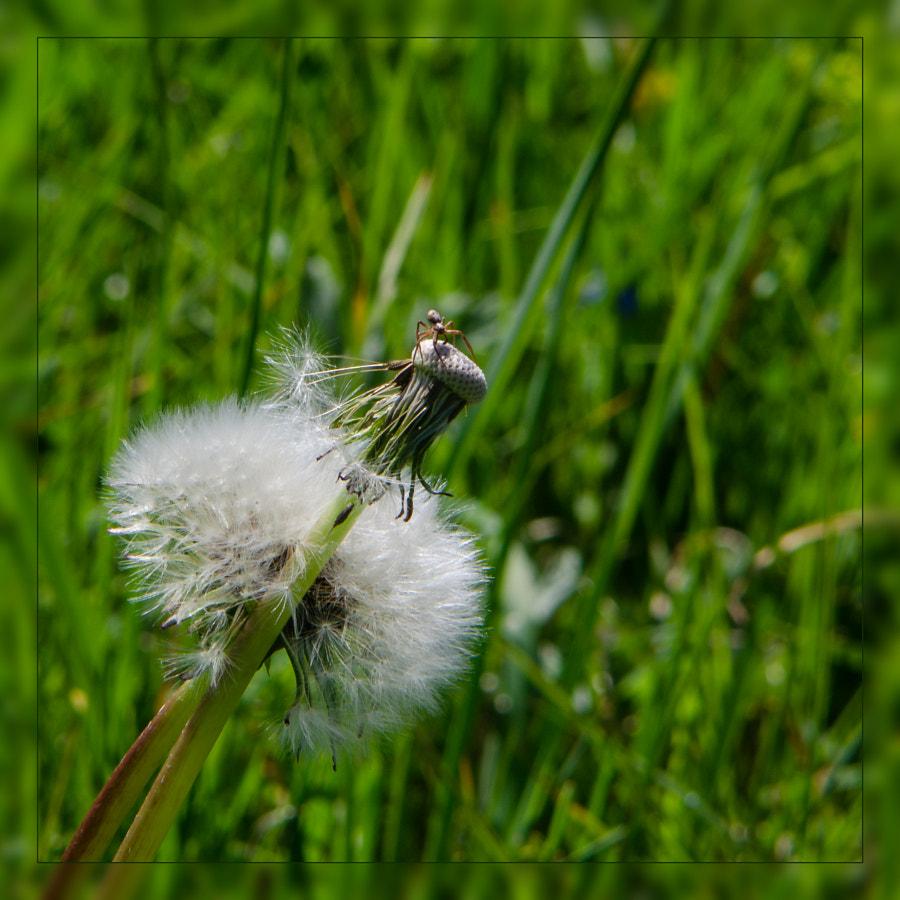 spider von dirk derbaum auf 500px.com