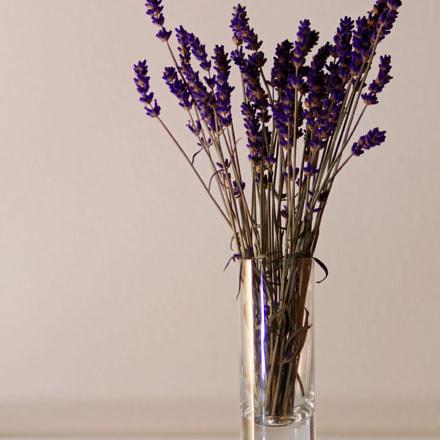 flower pot, Pentax K-5, HD PENTAX-DA 55-300mm F4-5.8 ED WR