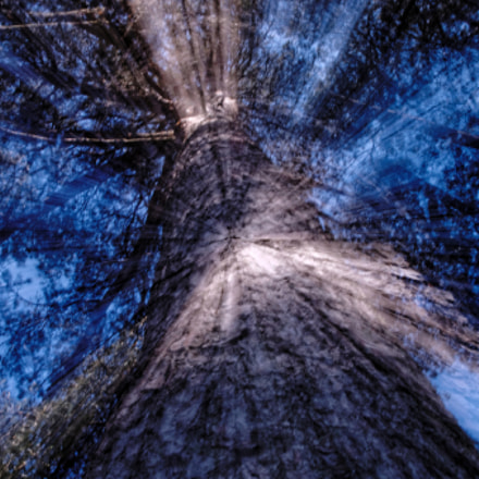 tree shifting, Pentax K-5