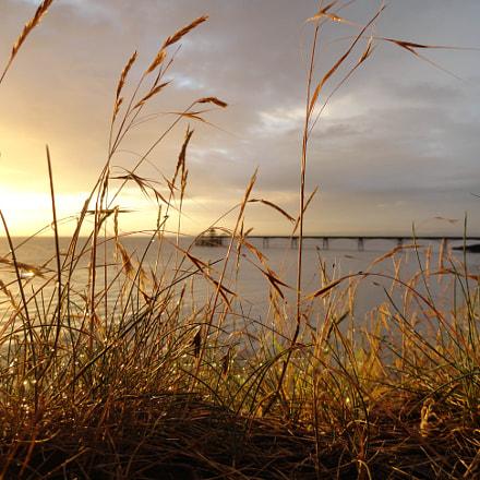 Sun Grass, Sony DSC-H70