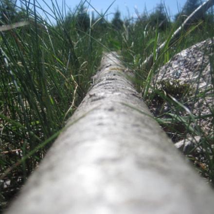 Fallen tree, Canon DIGITAL IXUS 95 IS