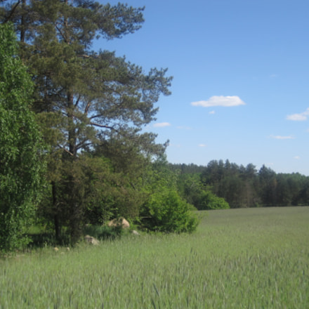 Growing wheat near a, Canon DIGITAL IXUS 95 IS