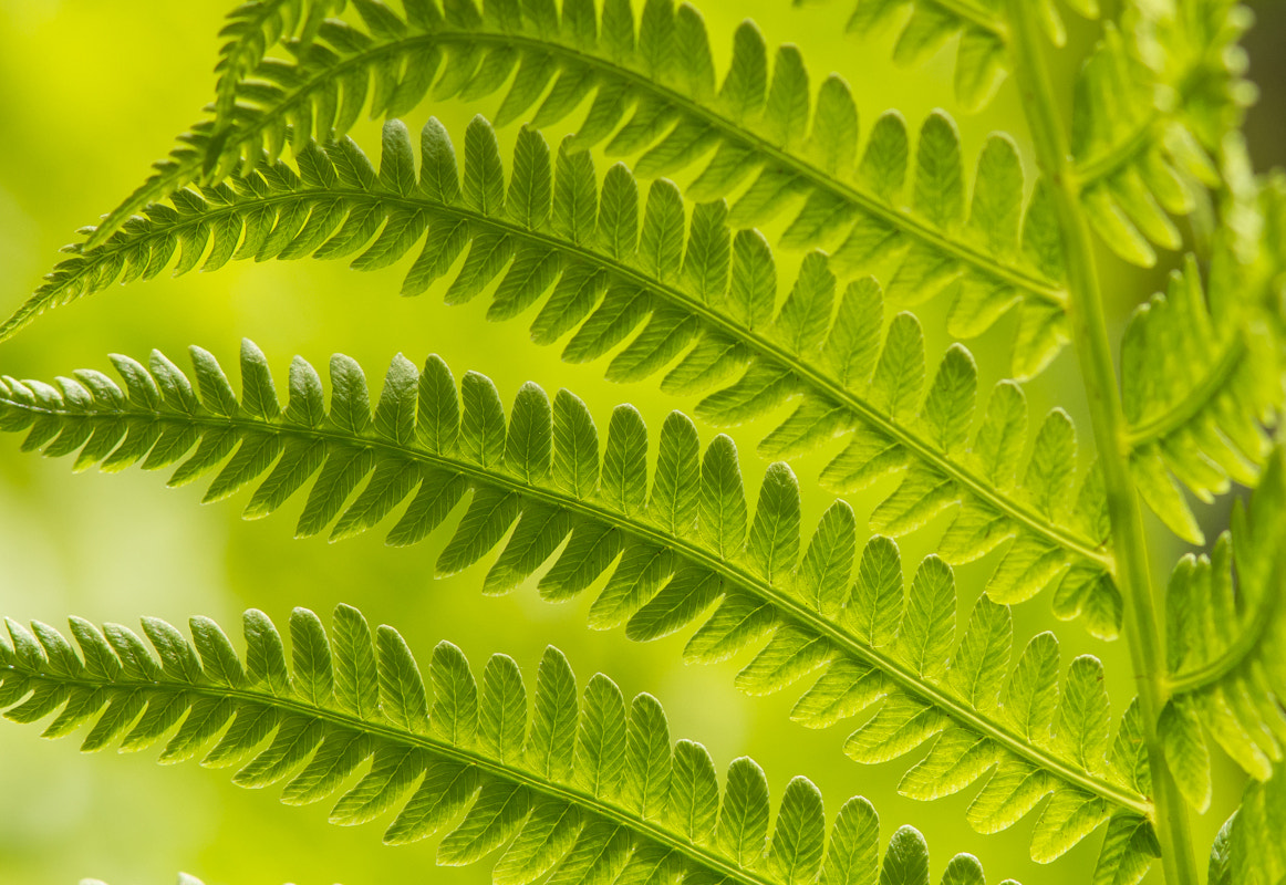 Photograph Green by Robert Lachaine on 500px