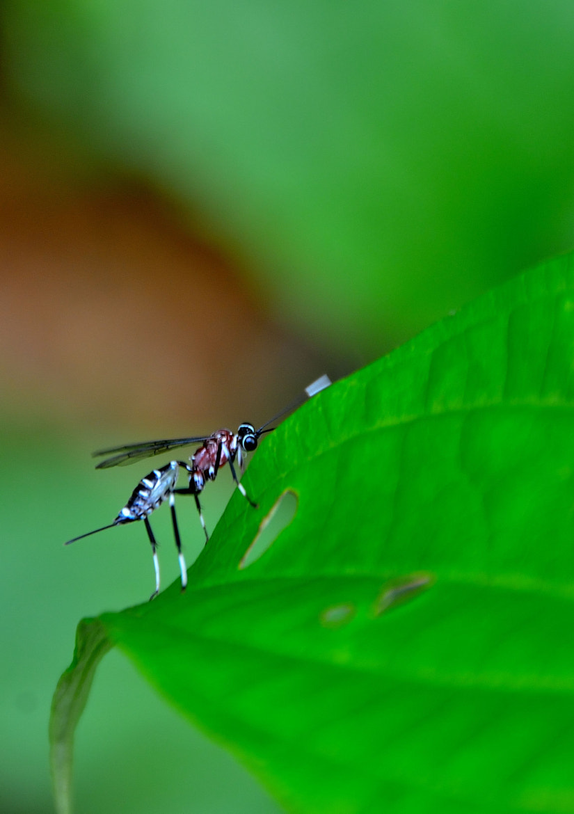Photograph Insecto by Xavier Ortega on 500px