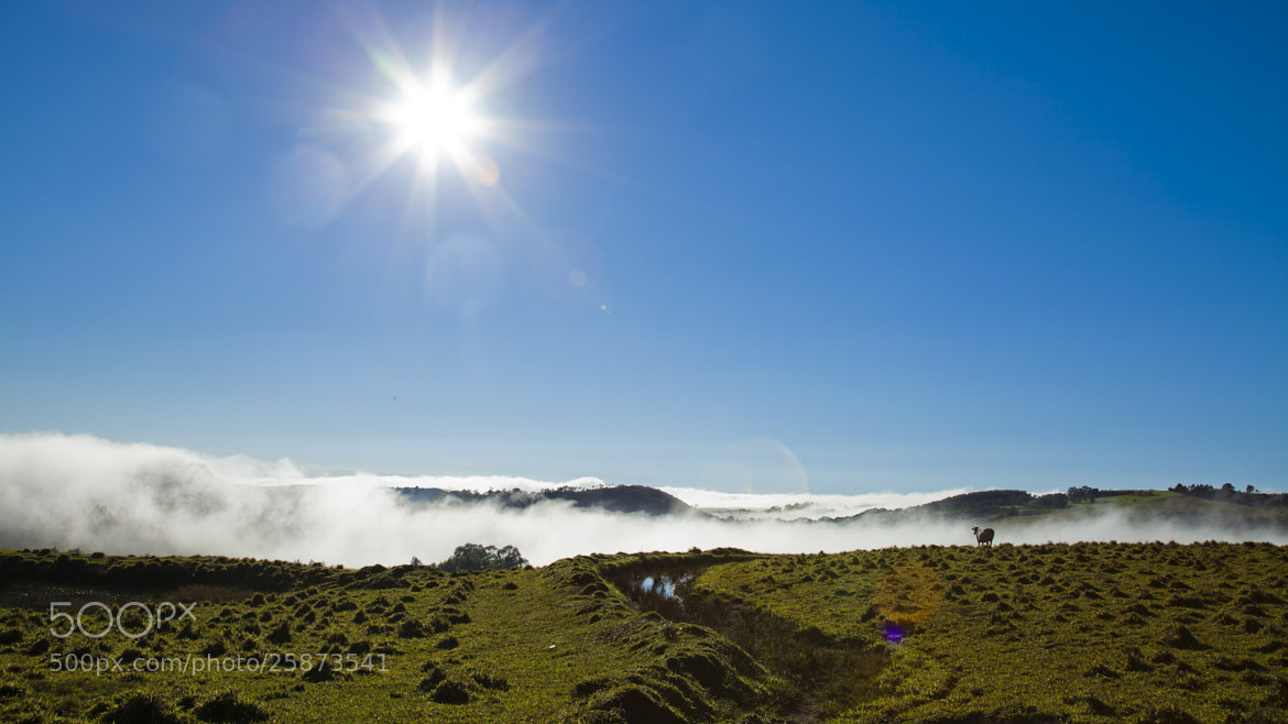 Photograph Pasto Paraná by Julio Brunet on 500px