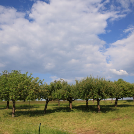 Orchard, Canon EOS 5D, Canon EF 24-105mm f/3.5-5.6 IS STM