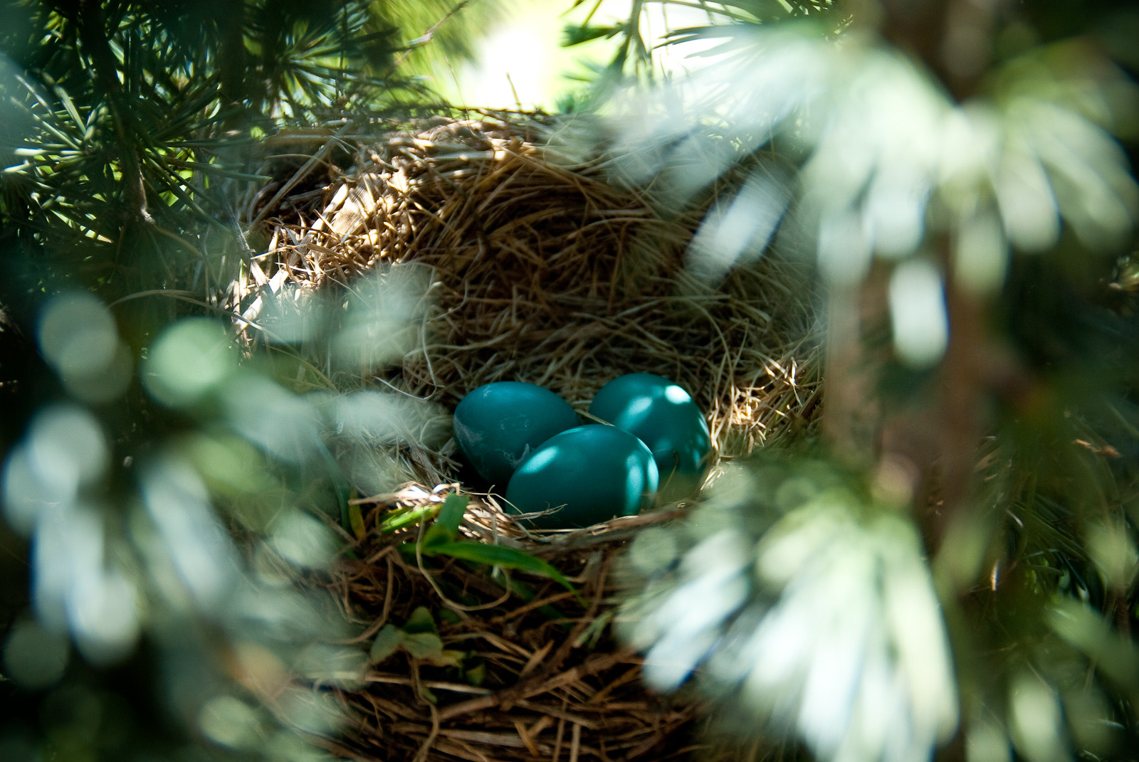 Photograph Robin's Nest by Jason Cox on 500px