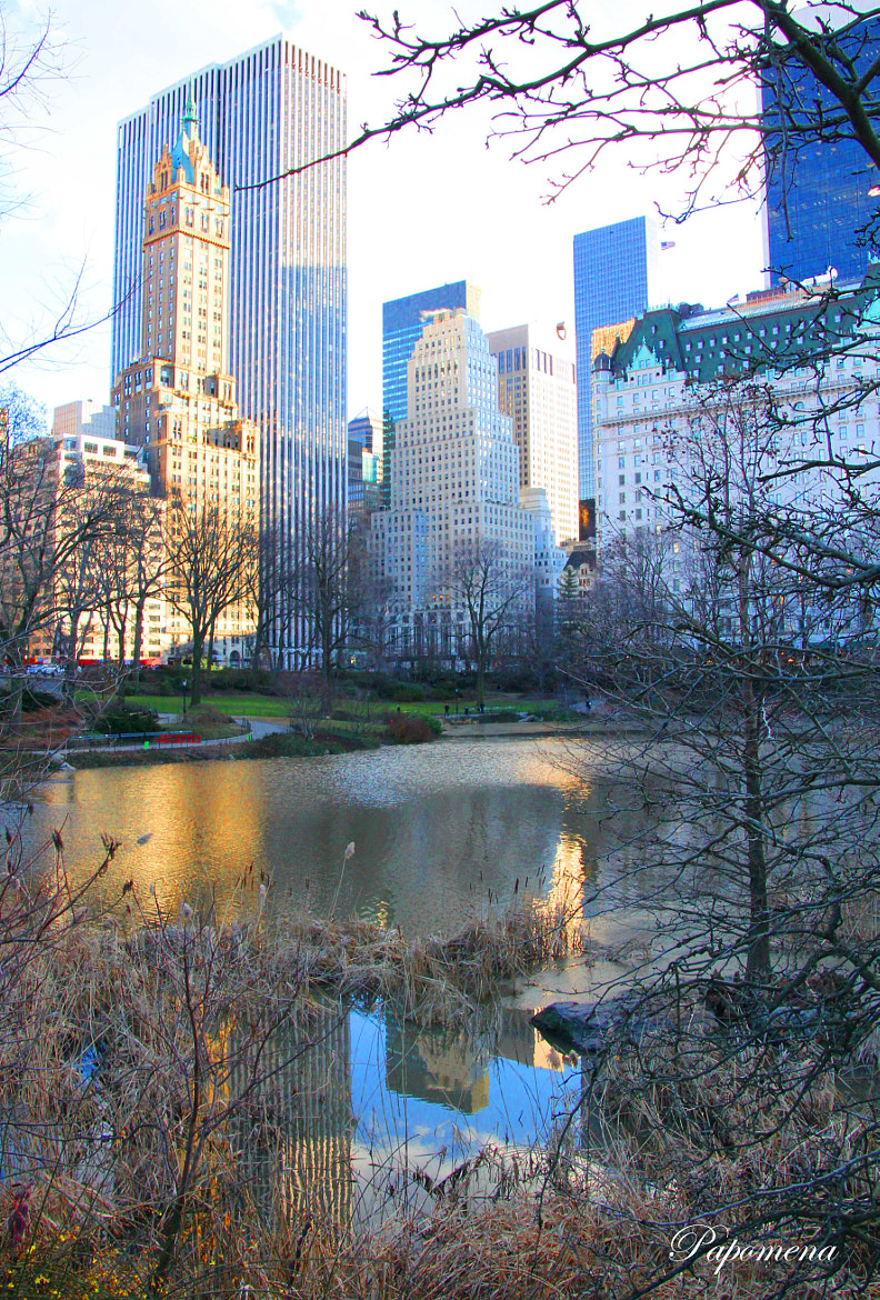 Photograph Reflections  in Central Park   by Papo Mena on 500px