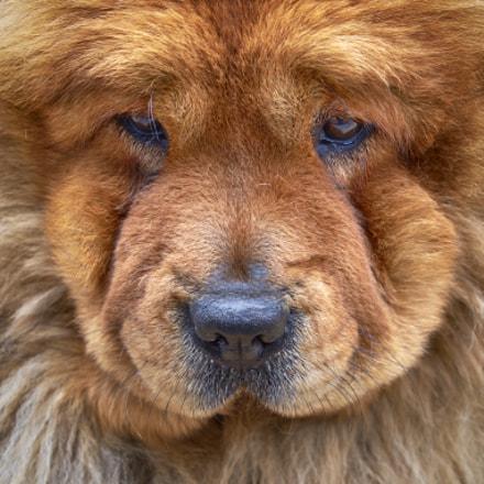 Cara de perro, Fujifilm X-T1, XF18-55mmF2.8-4 R LM OIS