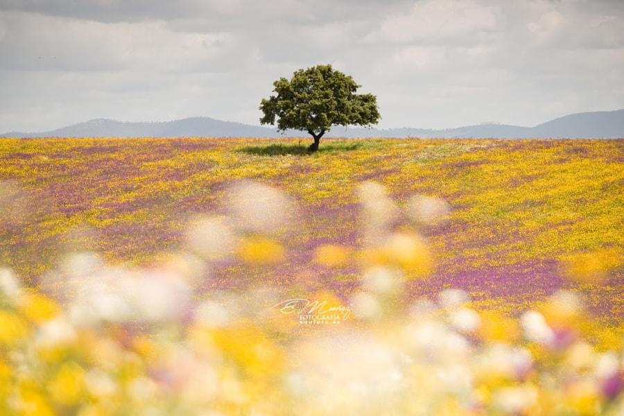 Spring picnic of fresh white daisies, lavender, multifloral natu de Eduardo Muñoz en 500px.com