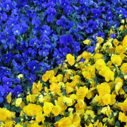 Blue&Yellow, Canon POWERSHOT SX220 HS