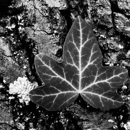 Leaf, Nikon COOLPIX L330