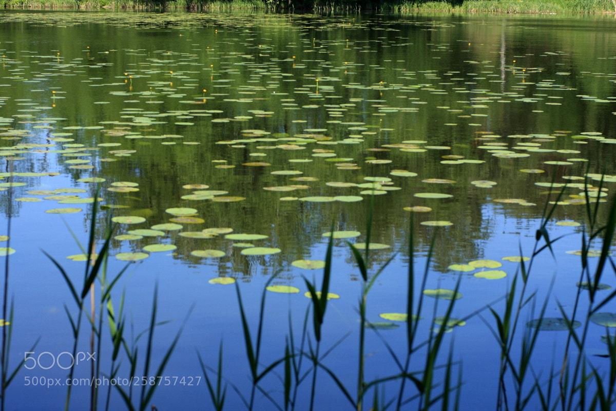 Dreaming Monet, Canon EOS 40D, Canon EF 35-80mm f/4-5.6