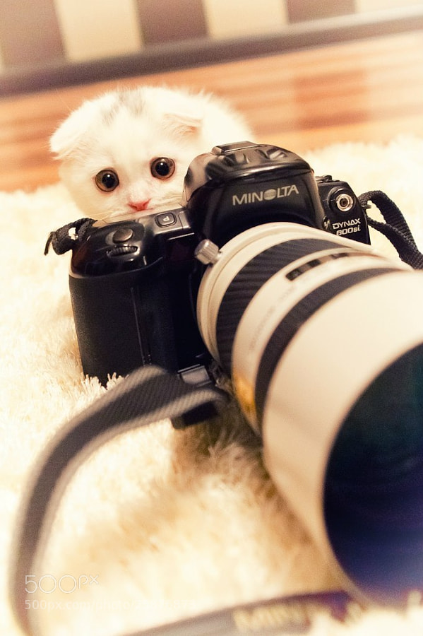 Photograph furry photographer... by Pavel Petrov on 500px