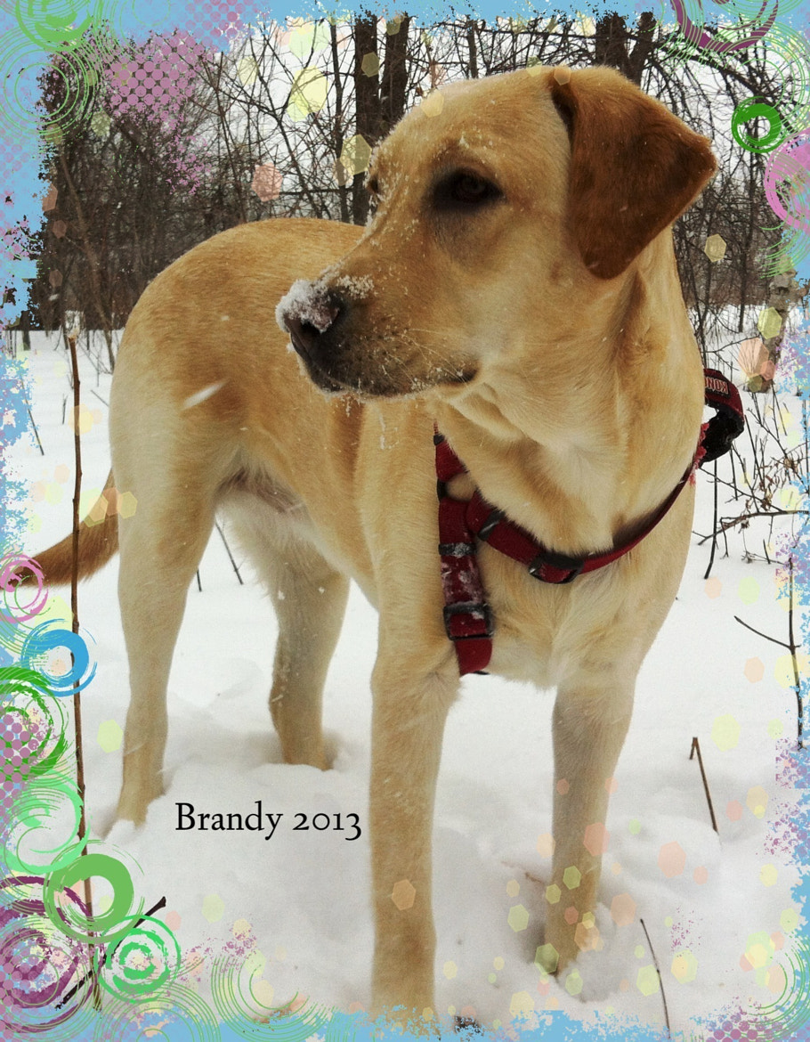 Photograph Brandy 2013 12 months old by Gary Labelle on 500px
