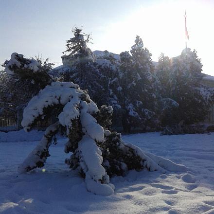 Причудливость дерева зимой  /Quaint tree in winter, Samsung Galaxy Core