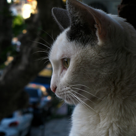 Cat, Canon POWERSHOT A2000 IS