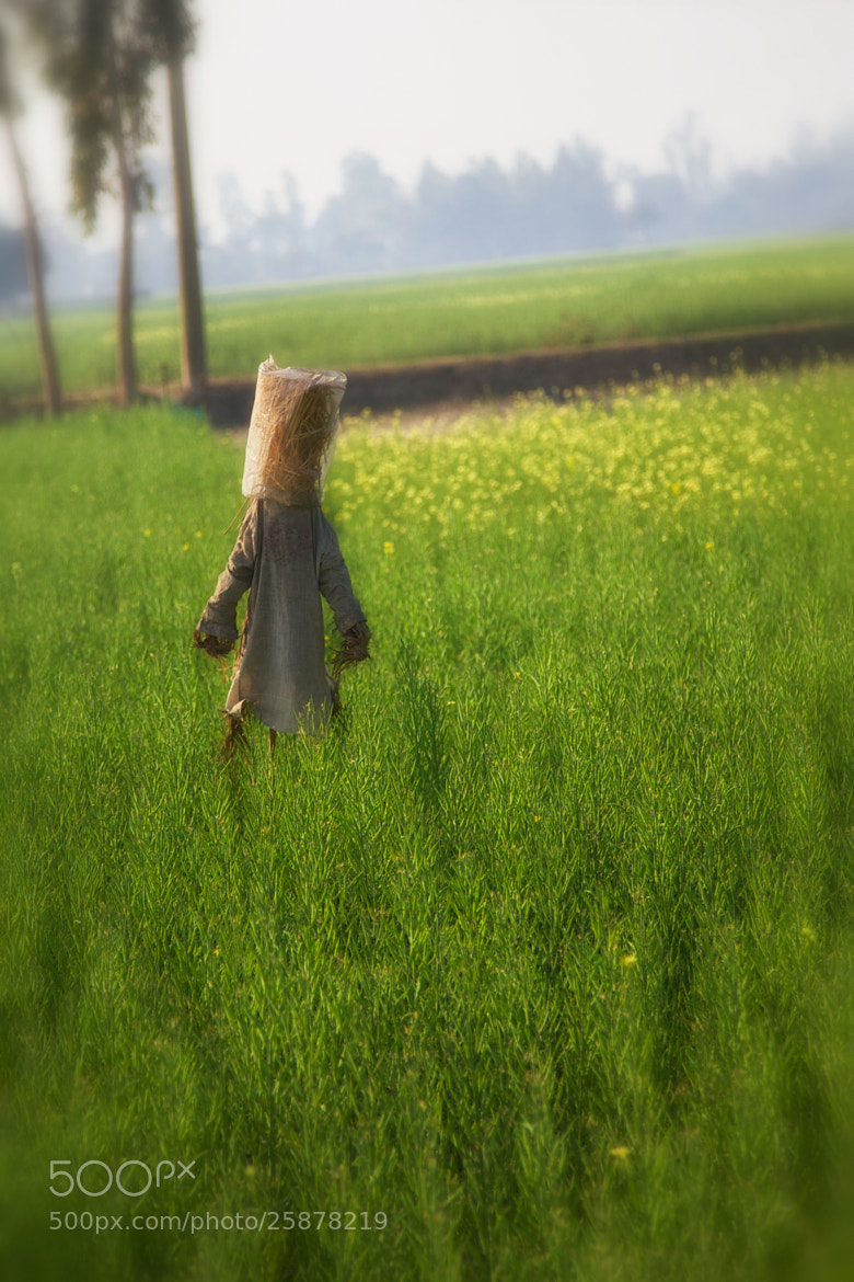 Photograph Puppet in field by Mahmud Ahsan on 500px
