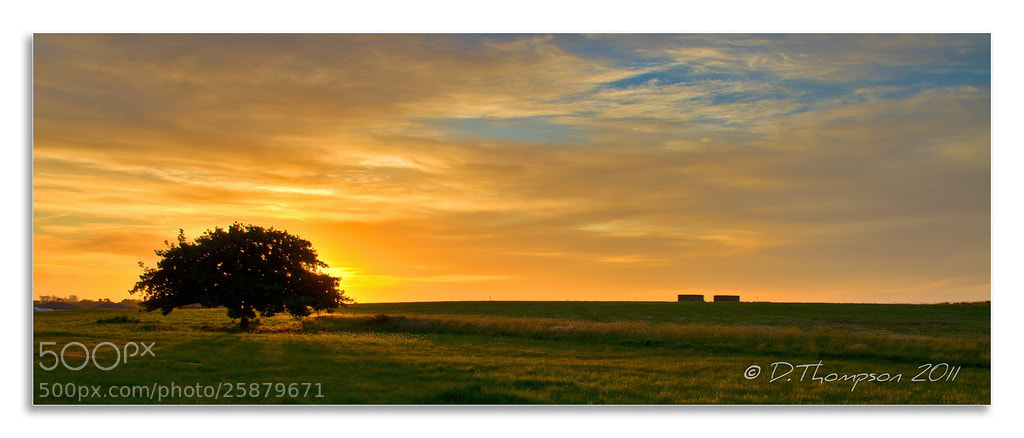 Photograph One Tree Hill by Green Orchard Photography on 500px