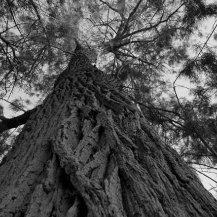 tree story, Fujifilm FinePix S1600