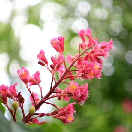 may flowers, Nikon D850, AF-S Nikkor 24-70mm f/2.8E ED VR