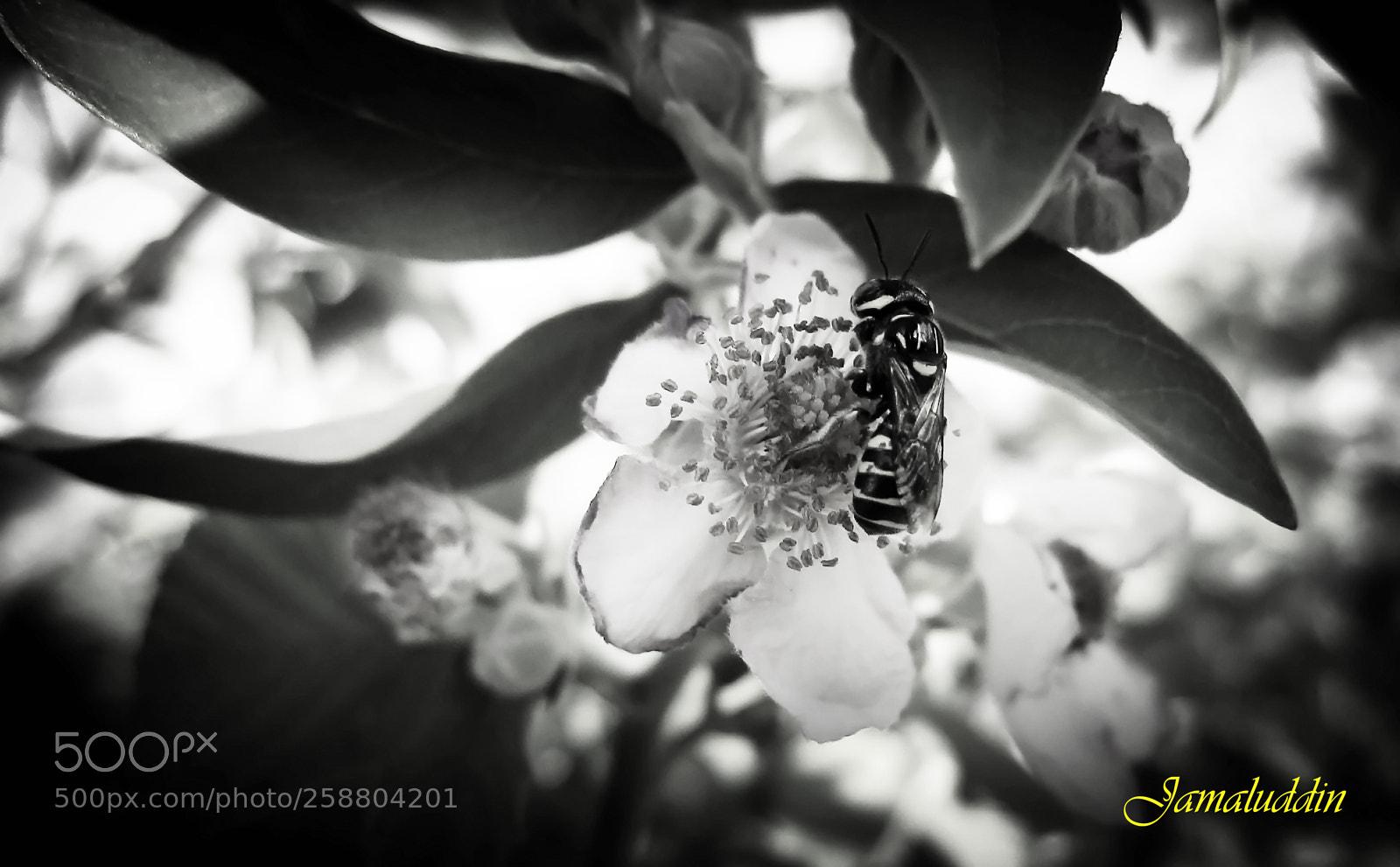 Bee and Flower, Canon DIGITAL IXUS 870 IS
